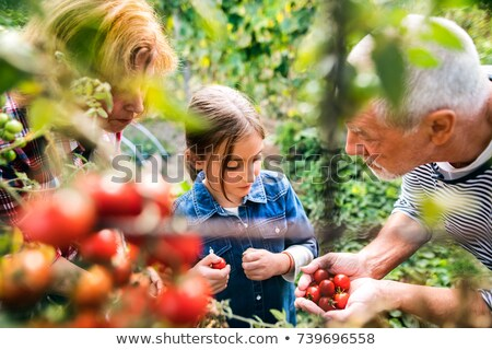 senior man holding cherry tomato in the garden stock photo © wavebreak_media