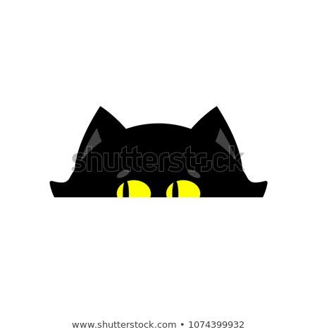 Gato aislado casa mascota fuera Foto stock © popaukropa