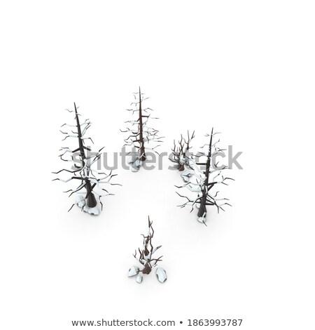 único inverno férias paisagem cena neve Foto stock © SArts