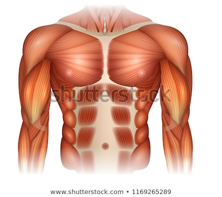 Male diastasis Recti Stock photo © Tefi