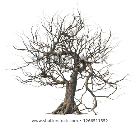 Set of dead tree Stock photo © bluering
