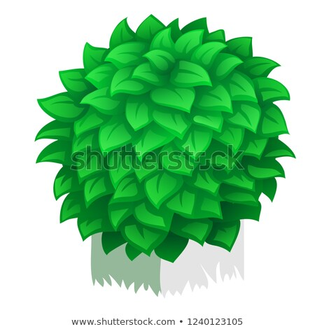Compacto arbusto aislado blanco vector Cartoon Foto stock © Lady-Luck