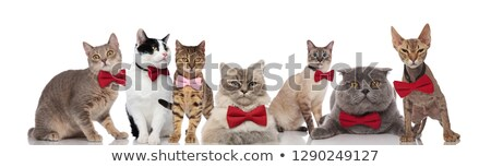 stylish group of cats wearing red and pink bowties stock photo © feedough