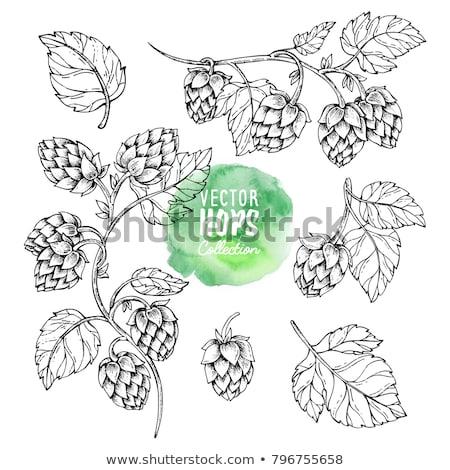 Hop plant bladeren schets monochroom schets Stockfoto © robuart