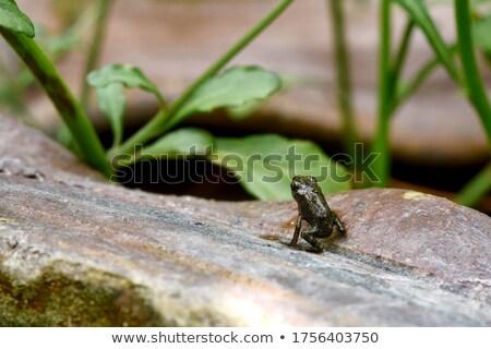 Pequeño sapo tiro forestales naturaleza Foto stock © prill
