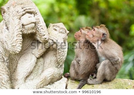 Sacro scimmia foresta Indonesia famiglia erba Foto d'archivio © galitskaya