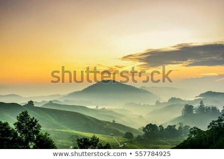 dramatic sunset sky with golden rays nature background stock photo © vapi