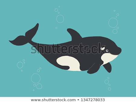 Killer whale orca cartoon hand drawn style Stock photo © amaomam