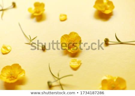 flor · pormenor · vermelho · natureza · planta · flor - foto stock © lichtmeister