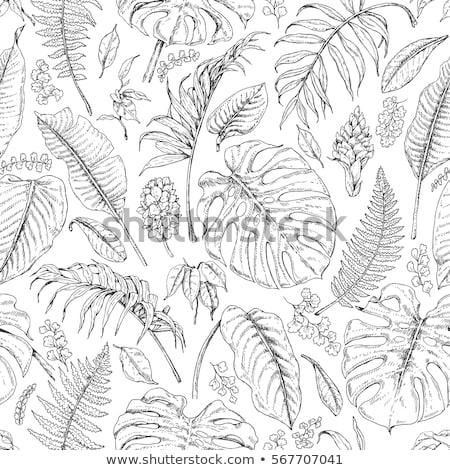 Trópusi egzotikus bokor levelek szín kézzel rajzolt Stock fotó © pikepicture