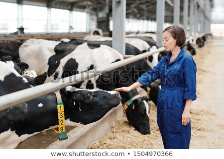 young female worker of animal farm touching one of milk cows stock photo © pressmaster