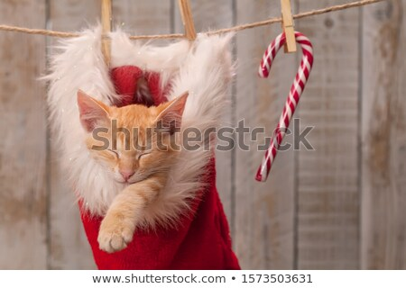 cute kitten sleeping in santa hat hanging on rope   close up stock photo © ilona75