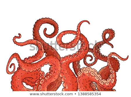 Cartoon colorful octopuses with tentacles Stock photo © anbuch