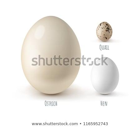 avestruz · ovo · branco · páscoa · pássaro · animais - foto stock © pavel_bayshev