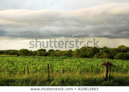 Gök gürültüsü fırtına güneş doğa yaz Stok fotoğraf © pterwort