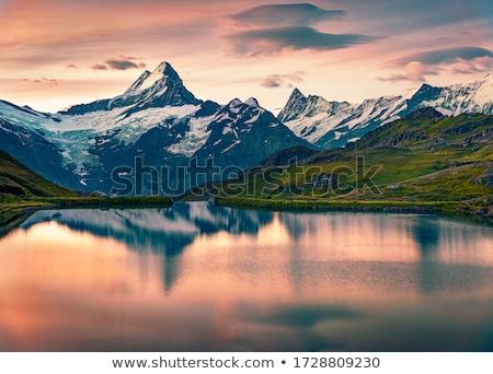 berg · plateau · achtergrond · zomer · koe - stockfoto © wildman