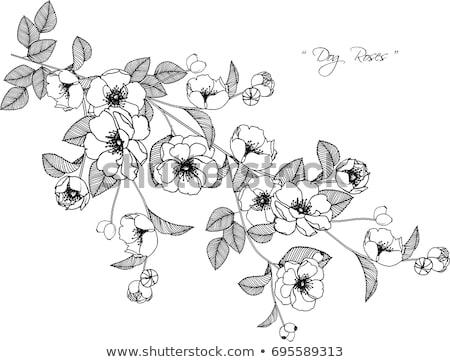 Valentin Floral Blanc Noir Main Dessin Fleur