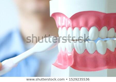 クリーン 歯 歯 ブラシ 2 歯科 ストックフォト © photohome