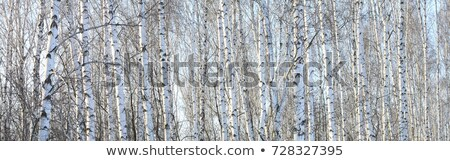 Bark closeup background Stock photo © Leonardi