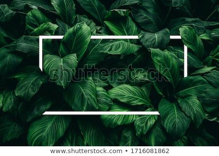 白い花 暗い 緑 植生 詳細 ストックフォト © prill