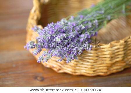 Gyönyörű levendula virágok kívül nyár közelkép Stock fotó © juniart