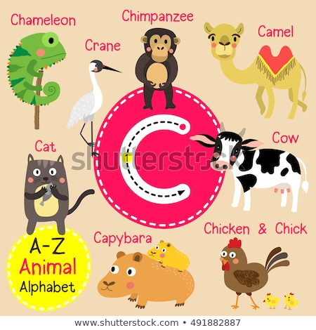 Csimpánz ábécé könyv boldog gyermek háttér Stock fotó © dagadu