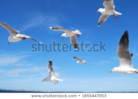 Seabird soaring in a blue sky Stock photo © wildnerdpix