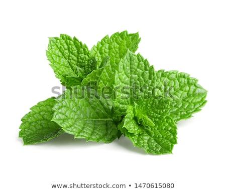 Menta blanco fondo verde medicina Foto stock © Masha