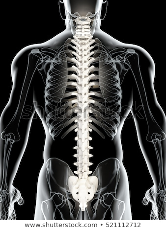 Human back spine Stock photo © Lightsource
