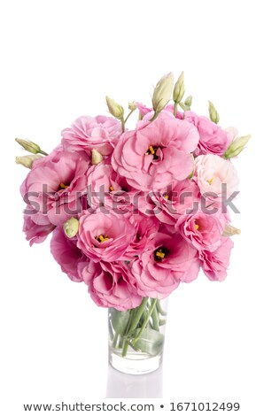 Pink eustoma flowers in glass vase Stock photo © neirfy
