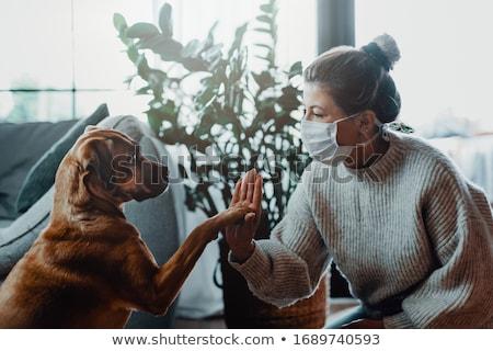 cat loves dog Stock photo © burakowski
