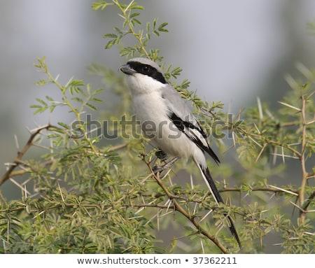 Cinza em pé rocha pássaro preto Foto stock © chris2766