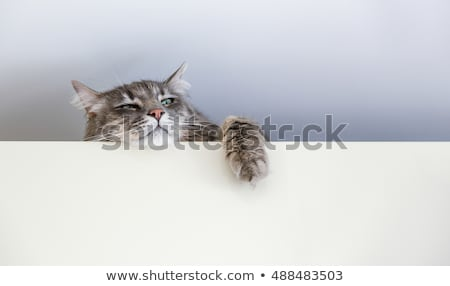 upside down cat stock photo © nelsonart