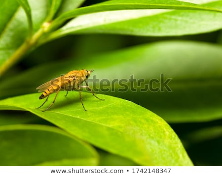 stiletto with green leaves Stock photo © shawlinmohd