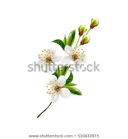gyümölcsfa · virágok · tavasz · kezdet · égbolt · fa - stock fotó © ankarb