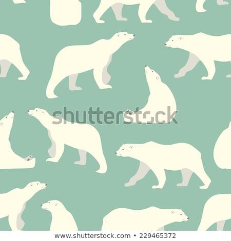 jegesmedve · víz · medve · park - stock fotó © kmwphotography