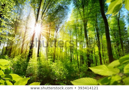 Illuminated Clearing in the Forest Stock photo © Kayco