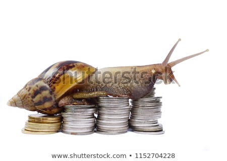Slow Business Growth Stock photo © Lightsource