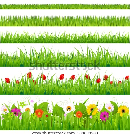 close up of tulip flower meadow isolated and sunny stock photo © nelosa