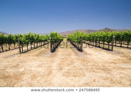 Californië droogte drogen woestijn textuur zon Stockfoto © emattil
