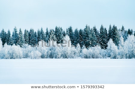 Weg dorp leidend huis natuur home Stockfoto © remik44992