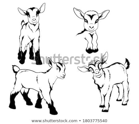 молодые коза дети молодежи играть сельского хозяйства Сток-фото © fanfo