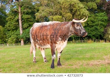 корова долго деревья природы зеленый Сток-фото © rekemp