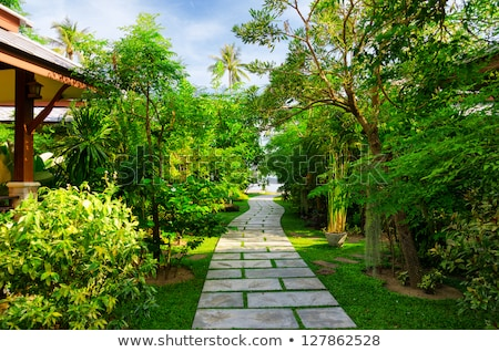 tropical garden with flowers and road to beach stock photo © master1305
