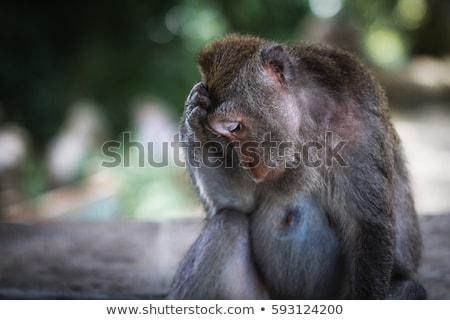 üzücü maymun portre krabi Tayland insan Stok fotoğraf © goinyk
