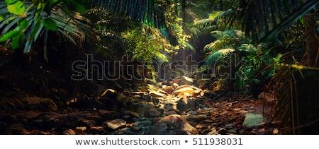 Gölet orman örnek su çim manzara Stok fotoğraf © bluering