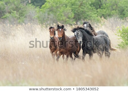 A horse at the forest Stock photo © bluering
