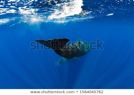 Gigant wielorybów pływanie ocean ilustracja charakter Zdjęcia stock © bluering