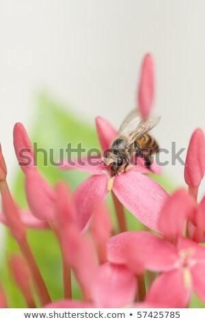 Méh virág gyűjt nektár virágpor fű Stock fotó © azamshah72