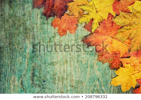 Autumn leaves on the grunge wooden cyan desk. Stock photo © Valeriy